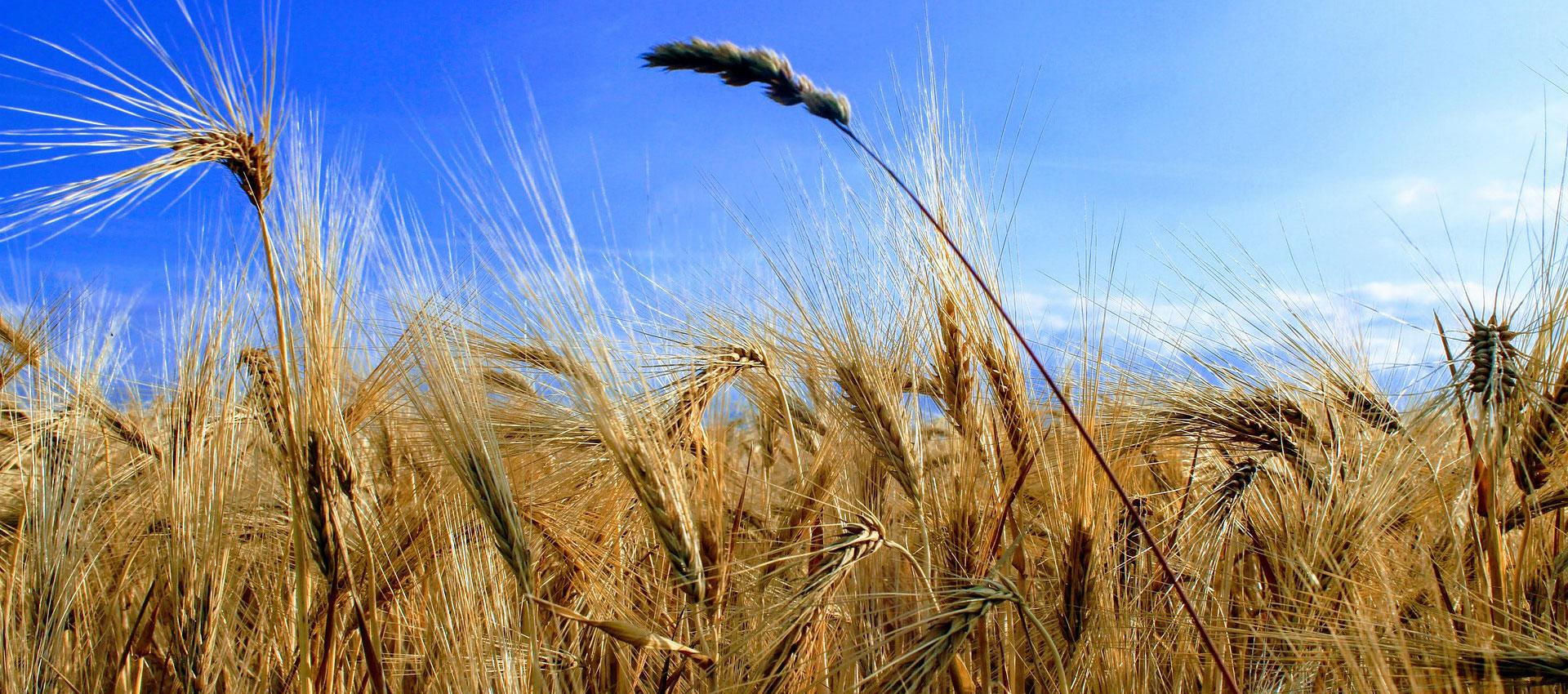 Software Butler - Das Batsch Butler® Warenwirtschaftssystem besteht aus zahlreichen branchenspezifischen Softwarebausteinen für den Bereich Erneuerbare Energie und die Agrarwirtschaft